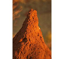 Termite mound Photographic Print