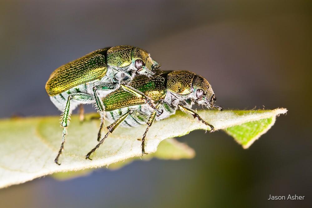Green Scarab Beetles - Diphucephala sp. by Jason Asher