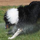 Bucking Pony Dog, Water Sprinkler Play by Jane McDougall