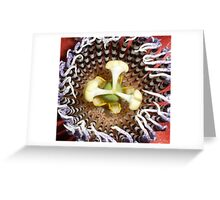 Passion Flower (macro) Greeting Card