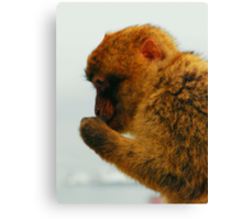 The Giggler Canvas Print