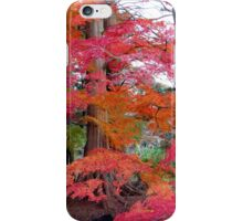 Autumn Colours 5 iPhone Case/Skin