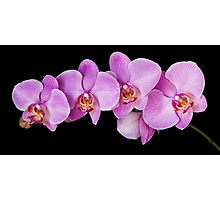 Red Phalaenopsis Orchid Photographic Print