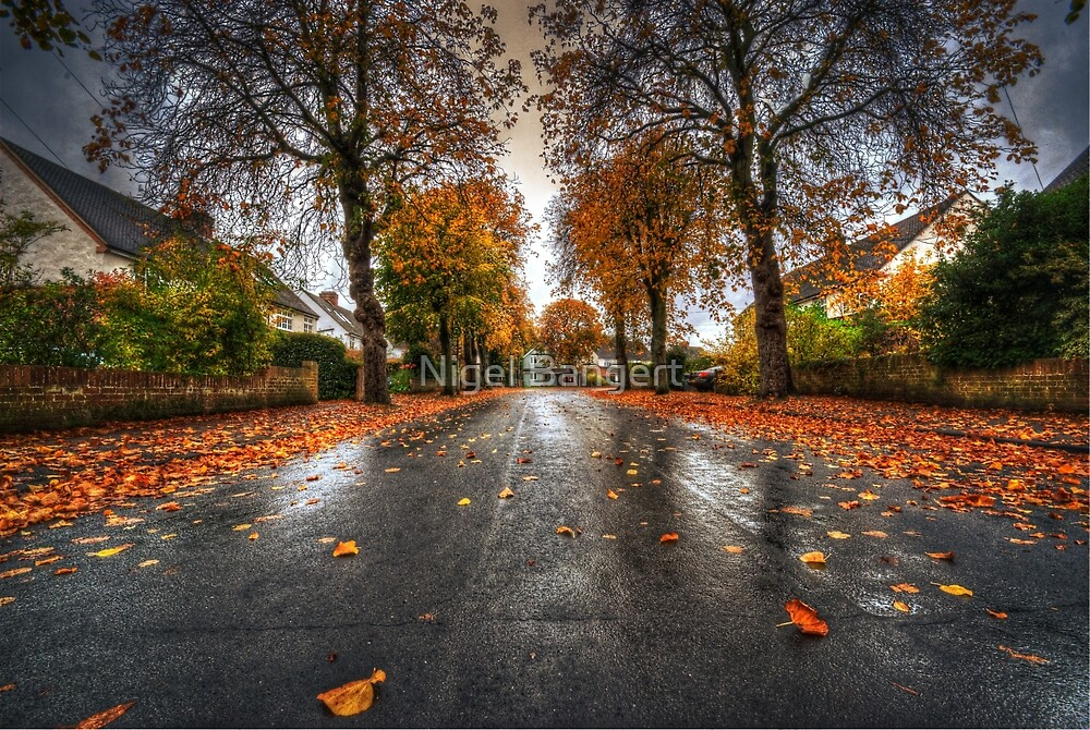 Rainy Autumn Road by Nigel Bangert
