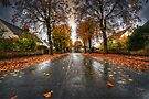 Rainy Autumn Road by Nigel Bangert