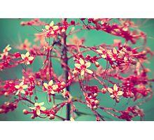 Aquatic Blooms Photographic Print