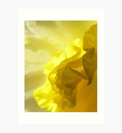 Daffodil abstract Art Print