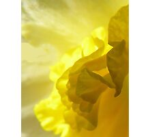 Daffodil abstract Photographic Print