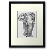 Elephant Drawing in Graphite Framed Print