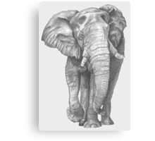 Elephant Drawing in Graphite Canvas Print