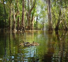 Flooding the River Reds.... Echuca Victoria by Trudi's Images