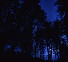 Moonlit Forest by Guy Carpenter