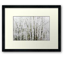 Soft Snowy Scene Framed Print