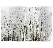 Soft Snowy Scene Poster