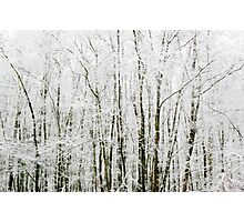 Soft Snowy Scene Photographic Print