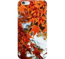 Autumn Colours 6 iPhone Case/Skin