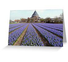 Blue hyacinths in a field Greeting Card