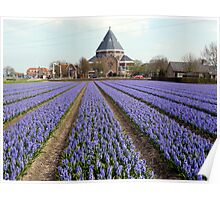 Blue hyacinths in a field Poster