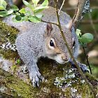 Squirrel on a Branch by Deb Vincent