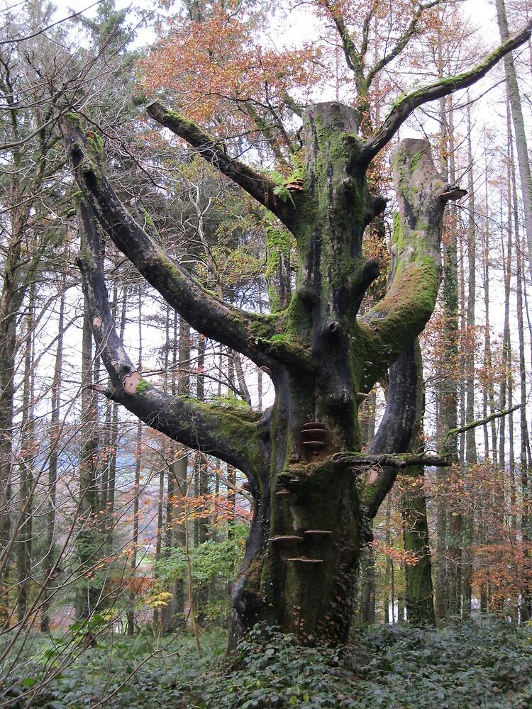 Dead Tree in forest, Pennal Mid Wales by stevenw888