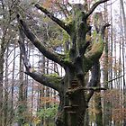 Dead Tree in forest, Pennal Mid Wales by stevenw888
