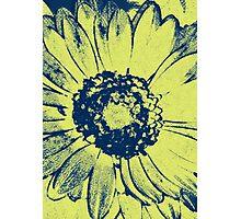 Hazy Lazy Daisy Photographic Print