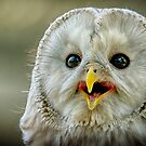 Mr. Owl by TJ Baccari Photography