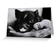 Piglet in Palm Greeting Card