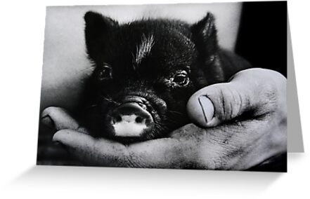 Piglet in Palm by Laurie Minor