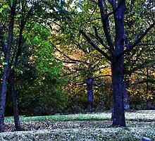 Autumn Trees October 2010 by mltrue