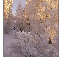 December Light by Maj-Britt Simble