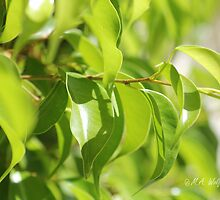 Green Leaves by Monica Wolfson