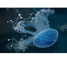 Jellyfish In Blue Photographic Print