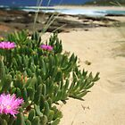 Beach Beauty - Margaret River Mouth Beach, WA, Australia by cookieshotz