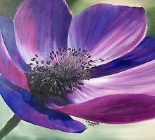 Anemone Coronaria by Claudia Goodell