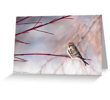 Common Redpoll on dogwood Greeting Card