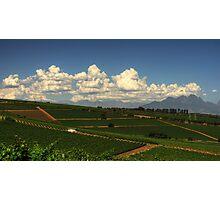 Cape Vineyards Photographic Print