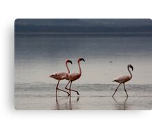 Lesser flamingoes, Lake Nakuru, Kenya Canvas Print