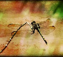 ~ Dragonfly Dreaming ~ by Leeo