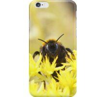 Golden Bee iPhone Case/Skin