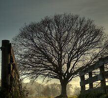 Treescape, Godalming by Chansen72