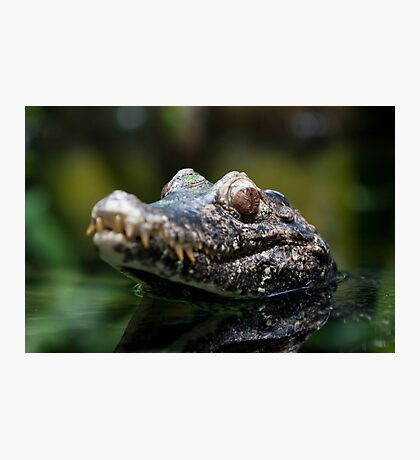 Crocodile Photographic Print