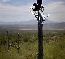 Raptor on Saguaro  by Lucinda Walter
