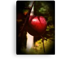 Accidental Crab-Apple Tree Canvas Print
