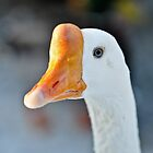 Blue Eyed Swan by GarethWilton