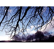 Welsh Trees Photographic Print