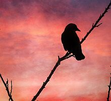 Jackdaw Sunset by GoatGirl