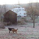 Dogs wrestle in frost, Ithaca NY by Christianne White