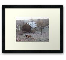 Dogs wrestle in frost, Ithaca NY Framed Print