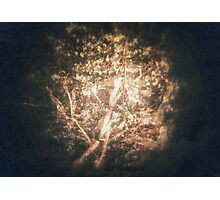 The Glade Photographic Print